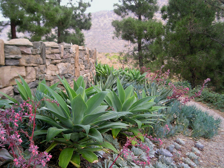 Hillsides marianne simon poetic plantings landscape for Southern california native plants