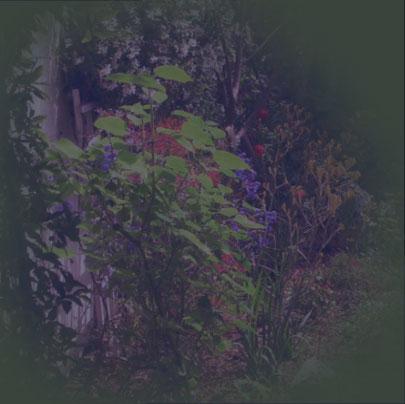 Durling Nursery Fruit Trees Marianne Simon Poetic Plantings Landscape Design And Water Gardens